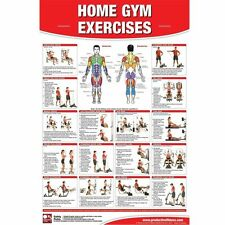 Productive Fitness Poster Series - Home Gym Exercises (Laminate or Non-Laminate)