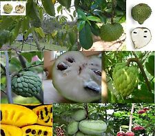 Annona, Custard-apple fruit tree types, Many Rare Yummy Easy grow - Seeds