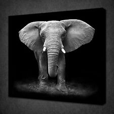 BLACK AND WHITE ELEPHANT ANIMAL DESIGN CANVAS PRINT WALL ART READY TO HANG