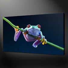 FROG FUNKY ANIMAL CANVAS PRINT WALL DESIGN READY TO HANG