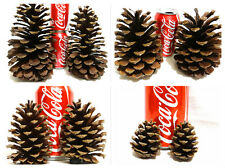 "CHOOSE SIZES 1""- 9"" REAL PINE CONES FOR CRAFTS BIG LARGE SMALL CHRISTMAS DECOR"