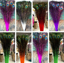 Wholesale 50-100pcs Beautiful peacock tail feathers 70-80cm / 28-32inches long