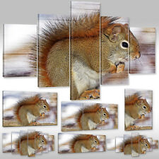 Canvas Picture Wall Tattoo Art Print Stretcher Frame Animals Wild Squirrel