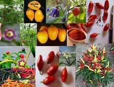 Capsicum, Chilli, Eggplant, Edible Solanaceae, Some Rare Yummy Easy Grow - Seeds