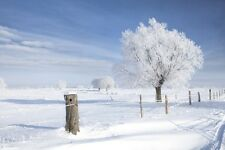 """Wall Mural """"Tree in Frost"""" Discounted Picture"""