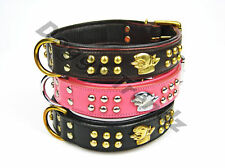 ENGLISH BULL TERRIER LEATHER DOG COLLAR PADDED BRASS