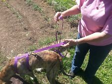 Two (2) Handle Dog Leash Great For Training Or Traffic USA MADE
