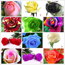 Buy 3 Get 1 Free!!! 100 x Various colours Rose seeds