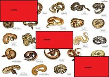 ROYAL PYTHON MORPH - Magnetic Posters VARIOUS x 4 joblot - Snakes - Reptile