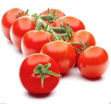 Campari Tomato Seeds,Very Juicy,High Sugar Level,low acidity,Lack of mealiness !