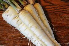 Harris Model Parsnips Seeds, Organic, HEIRLOOM VEGETABLE - Similar to carrots !