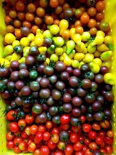 Cherry Tomato Seed (Allsort Mix) Beyond the basic red cherry tomato- Organic