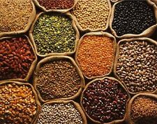 INDIAN PULSES LENTILS BEANS ASIAN DAL LEGUME NORTH INDIAN FOOD HIGH PROTEIN DIET