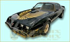 1978 1979 1980 Pontiac Firebird Trans Am Special Edition Bandit Decals & Stripes