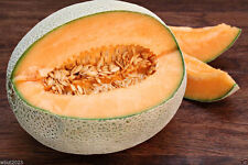 Hales Best Jumbo Melon Seeds - One of the most grown heirloom cantaloupe melons
