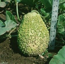 BLISTER GOURD SEEDS, Apple shape,Grows to a 9 x 12 inch size ,weighs 4-7 pounds.