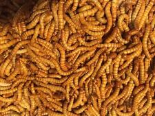 Live Mealworms - 500 Bulk Worms - Free Shipping