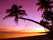 Tropical Paradise Sunset Palm Tree Beach Sea Beautiful Giant Wall Print POSTER