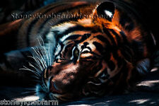 Tiger in the Shadows ~ Henriette Ronner Knip, Big Cats ~ Cross Stitch Pattern