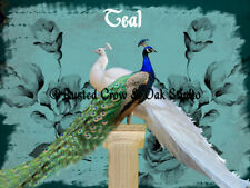 White Peacock Blue Peacock Bird Pair Home Decor Wall Art Matted Picture A732b