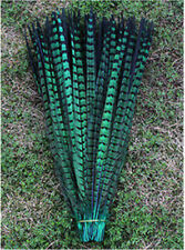 10-100 Pcs 30 -35 cm / 12-14 inch natural pheasant tail feathers Green