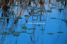 Waterlilies Reeds Reflections Water Abstract Art Photograph Mounted Print Cards
