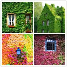 100pcs/bag Boston Ivy outdoor creepers Bonsai plants flower seeds grass seed Air