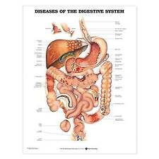Anatomical Chart Company Diseases Of The Digestive System Anatomical Chart