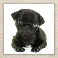 Pug Birthday Greetings Quality Blank Card Perfect for Mum Wife Sister Daughter