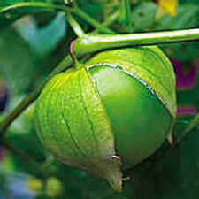 """Toma Verde"" Tomatillo Seeds"