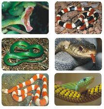 Snake Photo Labels Stickers Decals CRAFTS Teachers SCHOOLS Made In The USA #D66