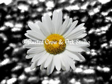 Modern Daisy Flower Floral Home Decor Art Print Matted Picture Blue Red USA A191