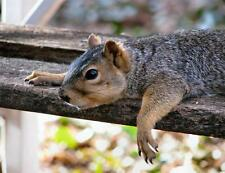 FUNNY SQUIRREL GLOSSY POSTER PICTURE PHOTO relax tired cute nut cool tree 2039