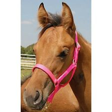 Foal Halter fits foals up to 200 lbs 7 Colors NEW