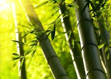 "Wall Mural ""Bamboo Forest"" Discounted Picture"
