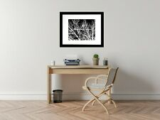 Contemporary Black and White Tree Bird Home Decor Art Matted Picture USA A539