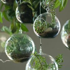 """USA Seller High Quality Hanging Plant Terrarium Candle Holder Large Size 5"""""""