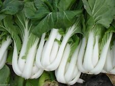 Asian vegetable Seed,Bok Choy (Pak Choi) non-heading Chinese Cabbage, Organic