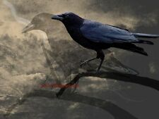 Crow Bird Double Exposure Black Brown Rustic Home Decor Art Matted Picture A664