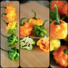 Authentic Jamaican Scotch Bonnet Pepper Seeds, NOT Yellow Or Orange Habanero !