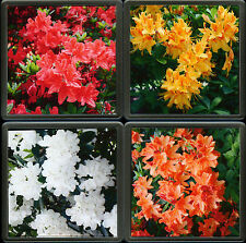 New Unique Photo Coaster Set of 4 Floral Acrylic Quality Drinks Coasters