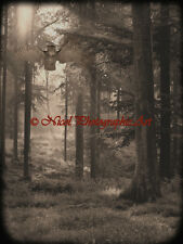 Rustic Owl Bird Trees Forest Woods Landscape Brown Wall Art Matted Picture A676