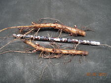 HOP RHIZOME HOPS RHIZOMES PLANT ROOT BEER MAKING  VARIETY GROW