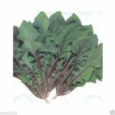 """Spinach Seeds""""Akarenso"""" (Asian Greens) Open Pollinate, Full grown or baby leaf"""