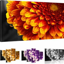 Pictures Gerbera Flower mural on canvas Art print Canvas picture