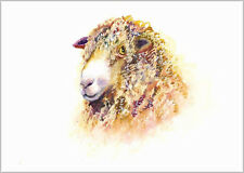 HELEN ROSE Limited Print SHEEP wildlife art watercolour painting   303
