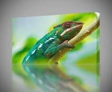 Chameleon CANVAS PRINT Home Wall Decor Giclee Art Poster Animal Lizzard CA335