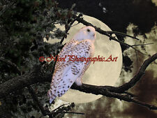 Snowy Owl Tree Moon Brown Black Country Home Decor Art Print Matted Picture A143