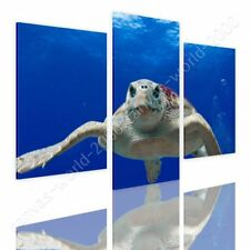 READY TO HANG CANVAS Sea Turtle Underwater Split 3 Panels 3 Panels Giclee