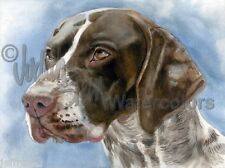 GSP German Shorthaired Pointer Dog Art Print of Watercolor Painting Judith Stein